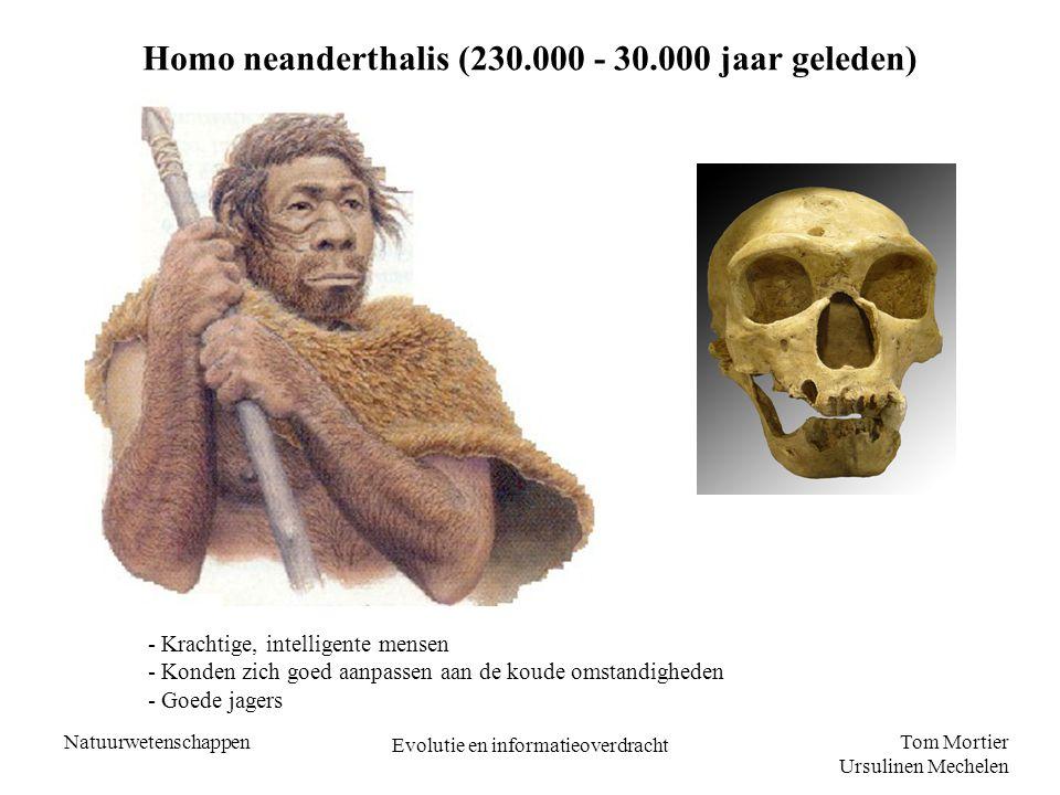 Tom Mortier Ursulinen Mechelen Natuurwetenschappen Evolutie en informatieoverdracht Homo neanderthalis (230.000 - 30.000 jaar geleden) - Krachtige, in