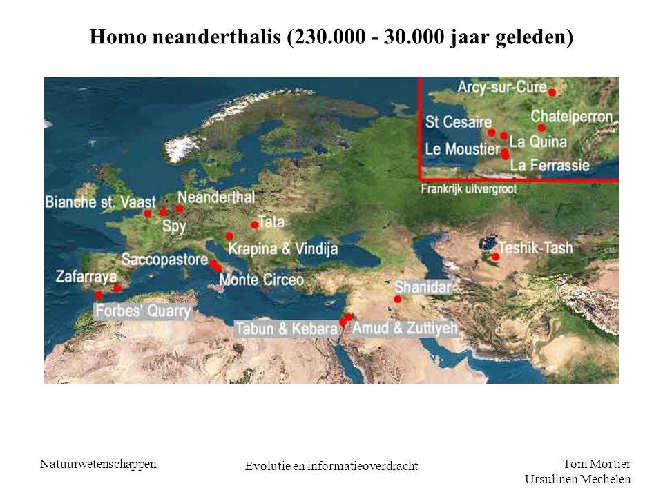 Tom Mortier Ursulinen Mechelen Natuurwetenschappen Evolutie en informatieoverdracht Homo Sapiens (150.000 - nu) - de denkende mens - grotere herseninhoud - groei onderkaak achtergebleven