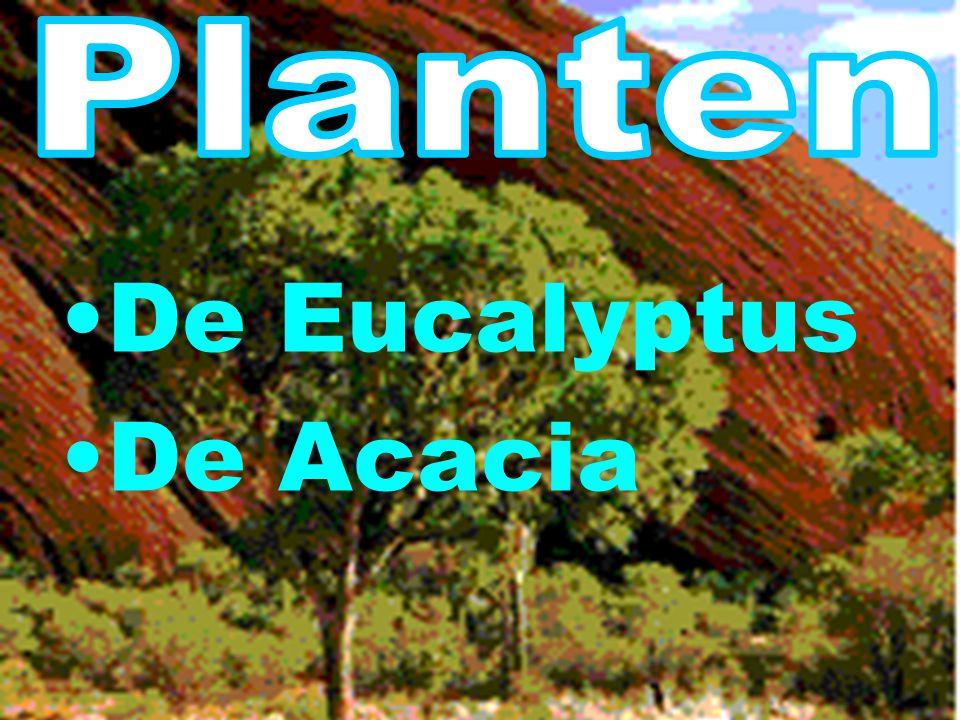 Planten Dieren Steden Mensen Vlag Abel tasman Planten Dieren Steden Mensen Vlag Willem Jansz Klimaat Quiz