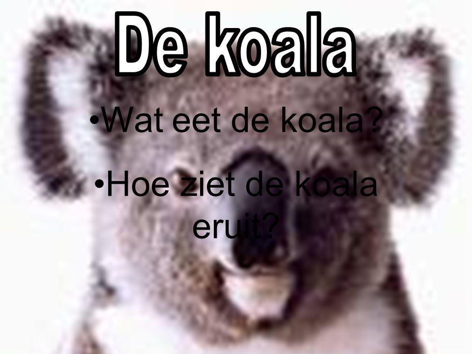 Koala Kangoeroe Vogelbekdier