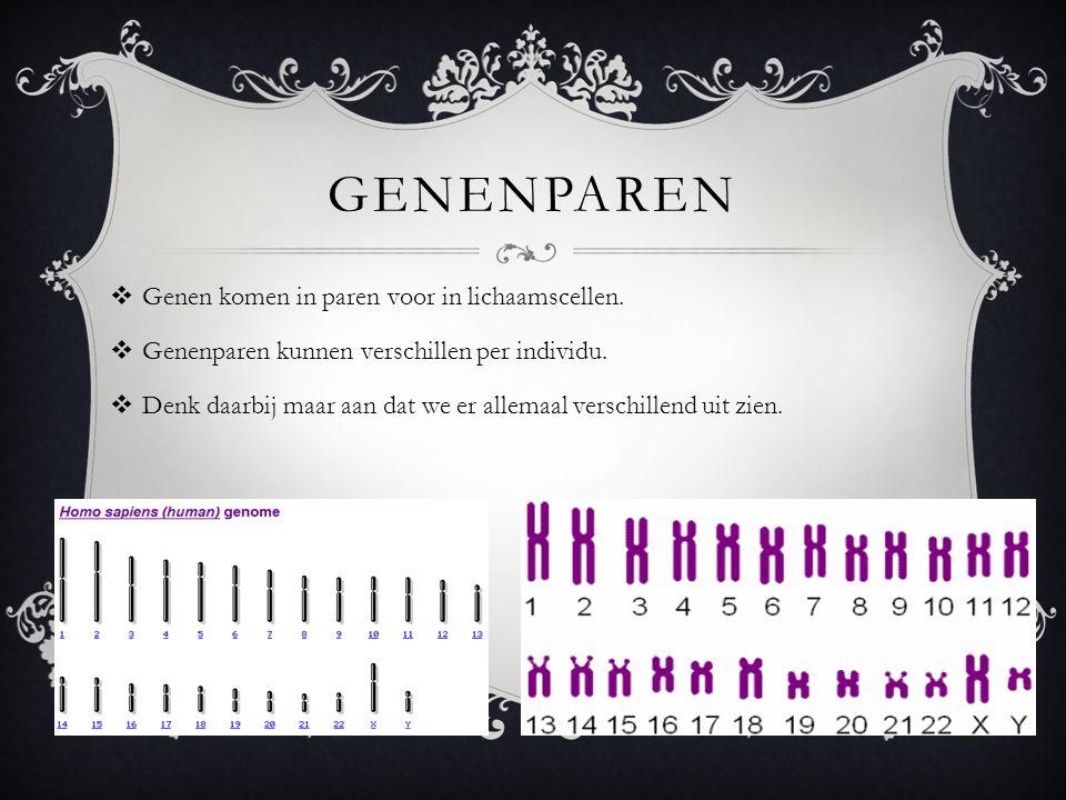 GENENPAREN  Genen komen in paren voor in lichaamscellen.  Genenparen kunnen verschillen per individu.  Denk daarbij maar aan dat we er allemaal ver