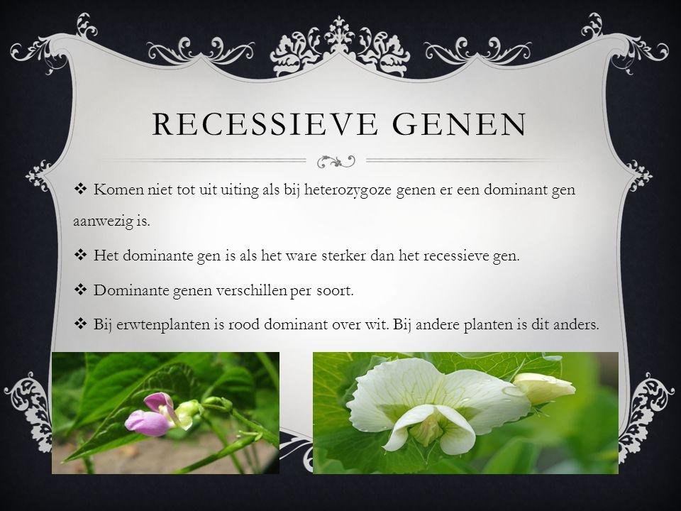 RECESSIEVE GENEN  Komen niet tot uit uiting als bij heterozygoze genen er een dominant gen aanwezig is.  Het dominante gen is als het ware sterker d