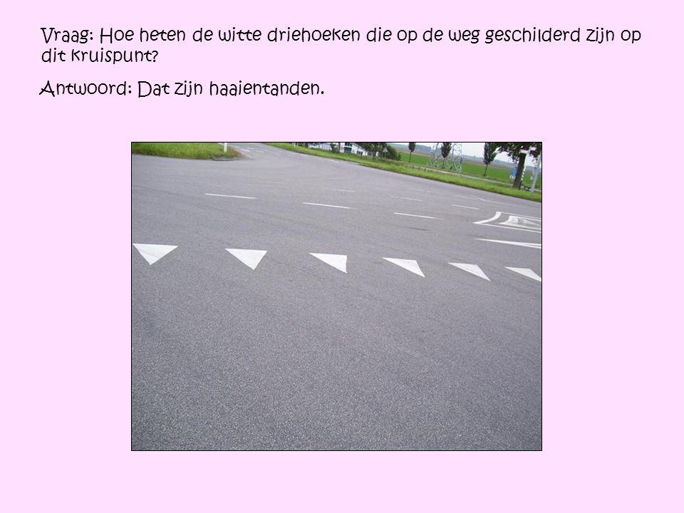 Vraag: Hoe heten de witte driehoeken die op de weg geschilderd zijn op dit kruispunt? Antwoord: Dat zijn haaientanden.