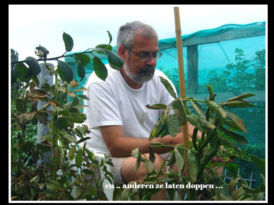 Tuinieren is ……. gewoon je eigen tuinboontjes planten,