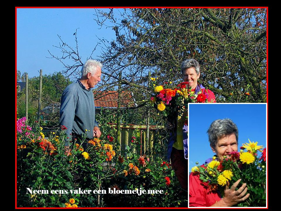Zeg het met bloemen ! Het geeft niets of je ze wel of niet kunt benoemen ! Fons, uw fotograaf Bloemen houden van mensen, maar ze hebben wel hun eigen