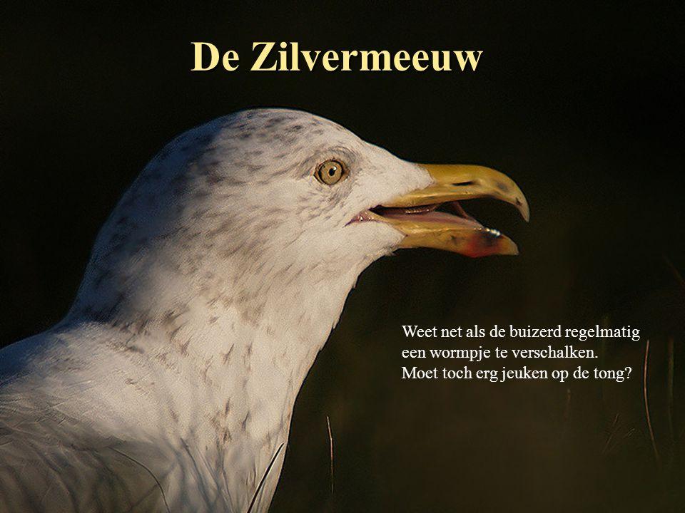 De Kuifleeuwerik Vroeger talrijk in Nederland, nu een enkel koppeltje.