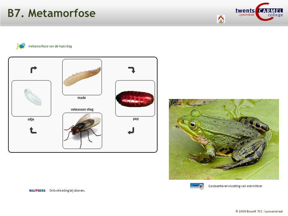 © 2009 Biosoft TCC - Lyceumstraat B7. Metamorfose Ontwikkeling bij dieren. Metamorfose van de huisvlieg Gedaanteverwisseling van een kikker