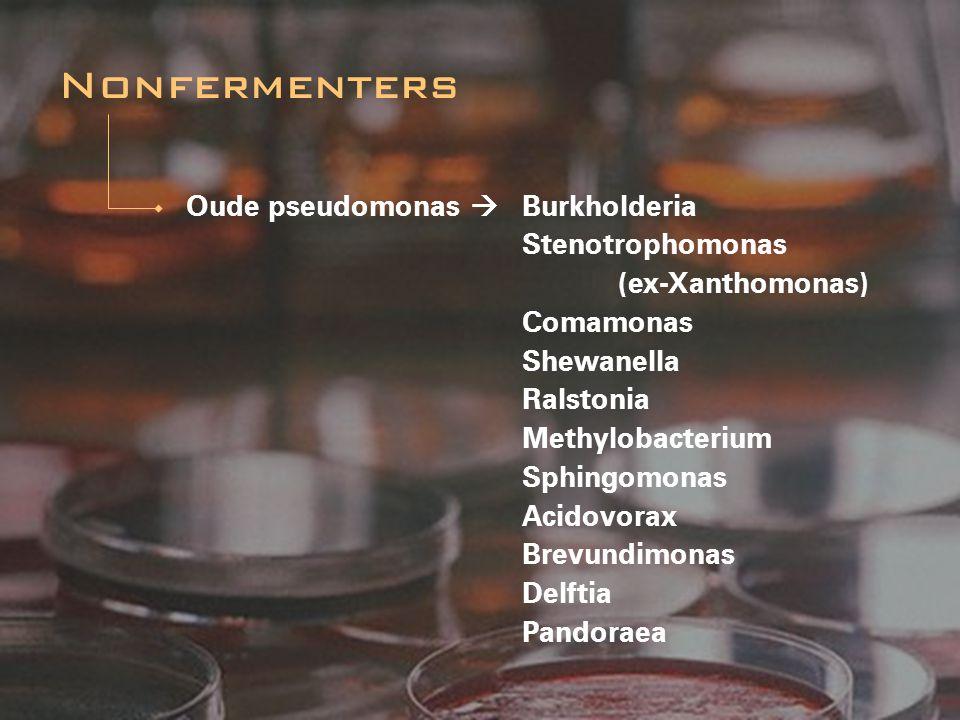 Oude pseudomonas  Burkholderia Stenotrophomonas (ex-Xanthomonas) Comamonas Shewanella Ralstonia Methylobacterium Sphingomonas Acidovorax Brevundimona