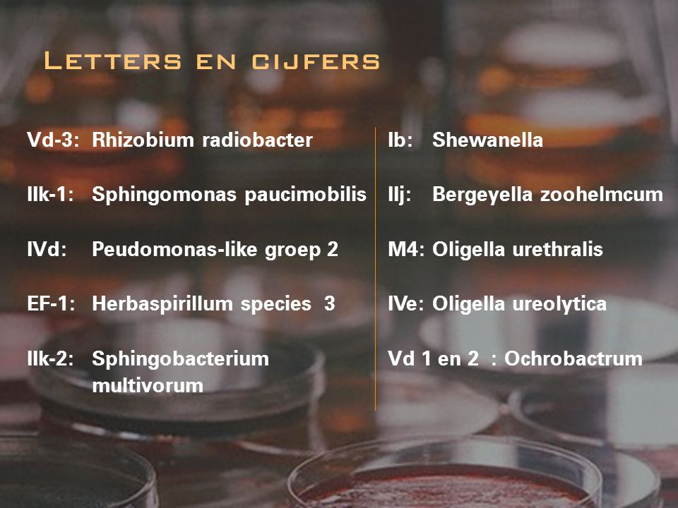 Vd-3:Rhizobium radiobacter IIk-1:Sphingomonas paucimobilis IVd: Peudomonas-like groep 2 EF-1:Herbaspirillum species 3 IIk-2:Sphingobacterium multivoru