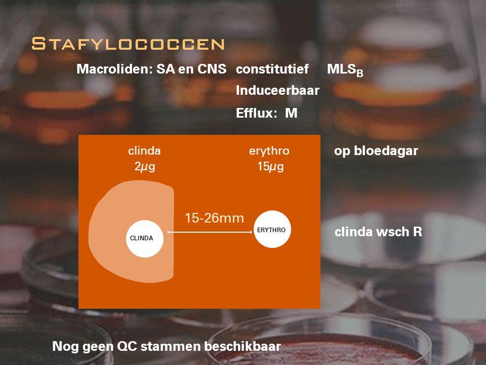 Macroliden: SA en CNS constitutief MLS B Induceerbaar Efflux: M Nog geen QC stammen beschikbaar Stafylococcen op bloedagar clinda wsch R 15-26mm CLIND