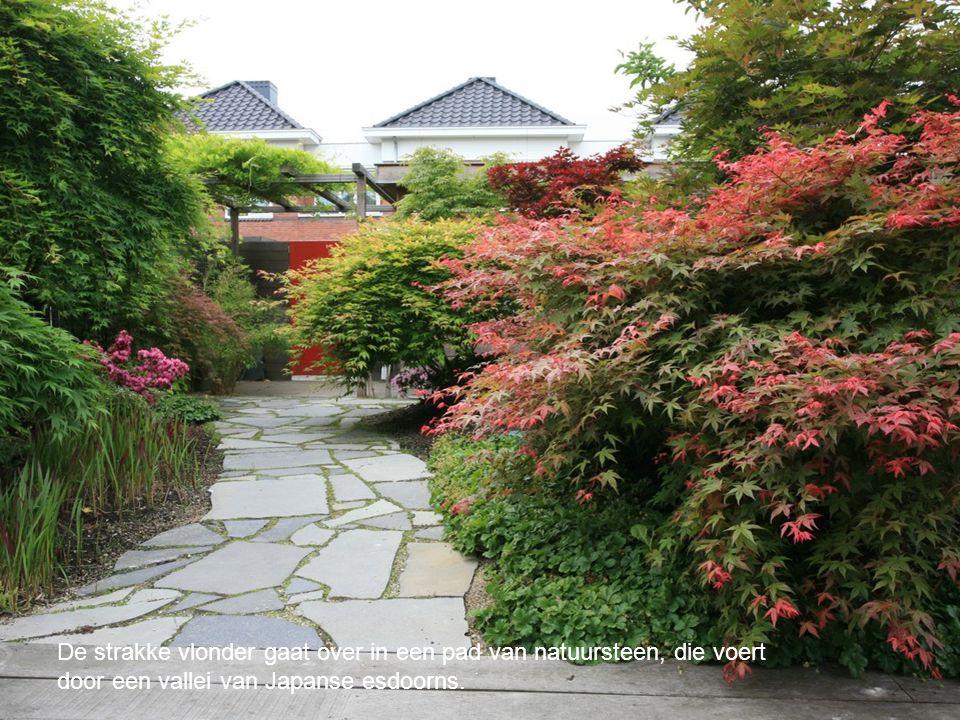 De strakke vlonder gaat over in een pad van natuursteen, die voert door een vallei van Japanse esdoorns.