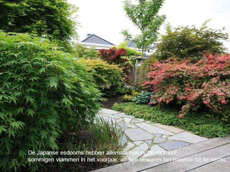 Voor deze tuin hebben we ook het ontwerp gemaakt van de schuur.