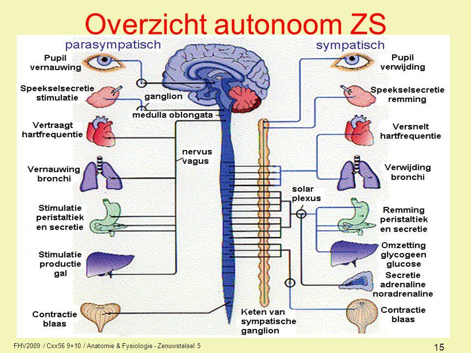 FHV2009 / Cxx56 9+10 / Anatomie & Fysiologie - Zenuwstelsel 5 15 Overzicht autonoom ZS