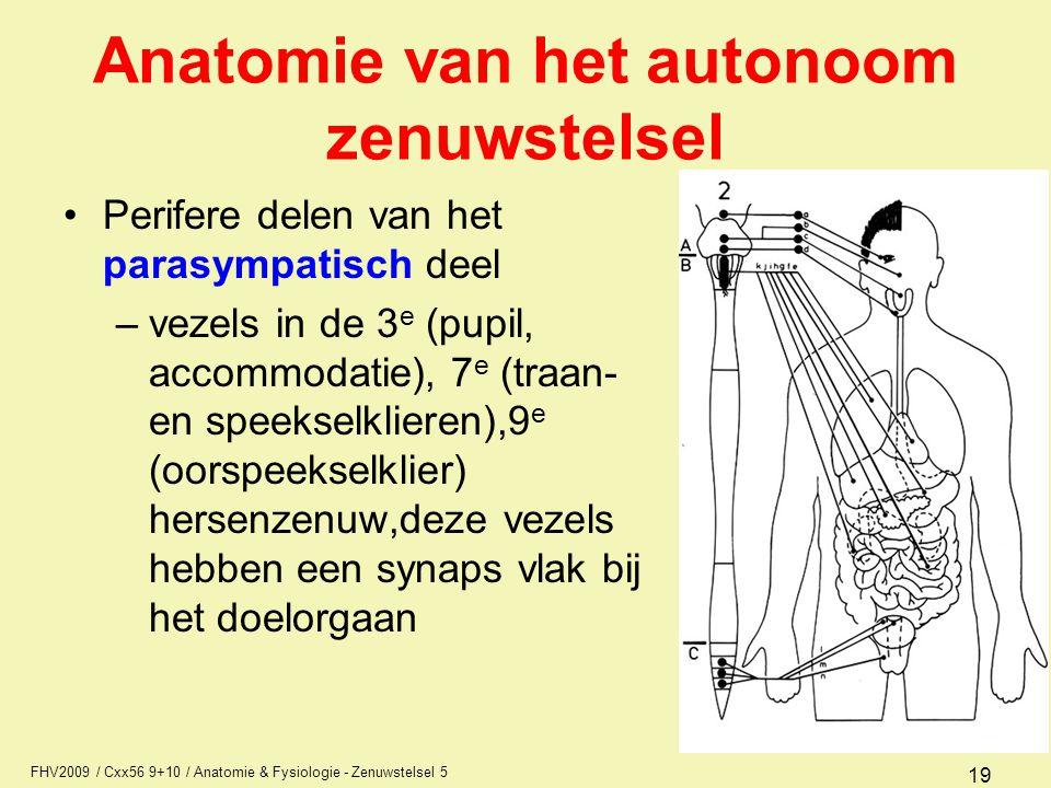 FHV2009 / Cxx56 9+10 / Anatomie & Fysiologie - Zenuwstelsel 5 19 Anatomie van het autonoom zenuwstelsel Perifere delen van het parasympatisch deel –ve