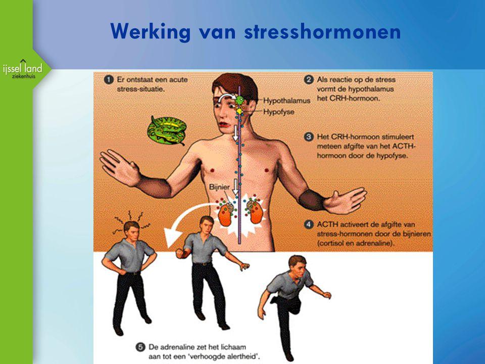 Werking van stresshormonen