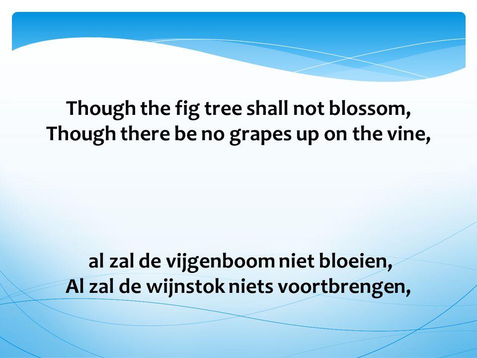 Though the fig tree shall not blossom, Though there be no grapes up on the vine, al zal de vijgenboom niet bloeien, Al zal de wijnstok niets voortbrengen,