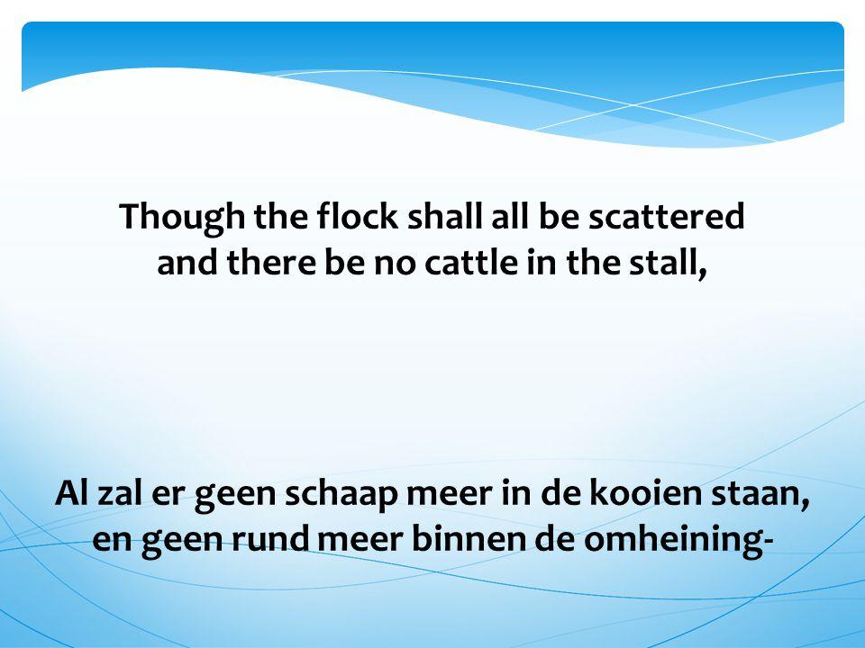 Though the flock shall all be scattered and there be no cattle in the stall, Al zal er geen schaap meer in de kooien staan, en geen rund meer binnen de omheining-