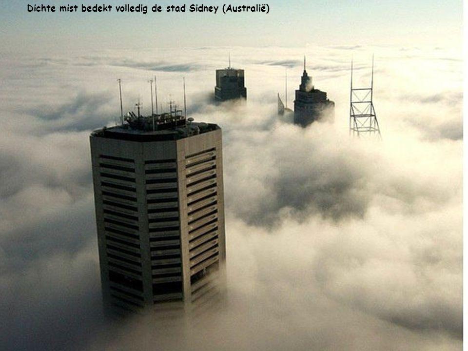 De wolkenkrabber