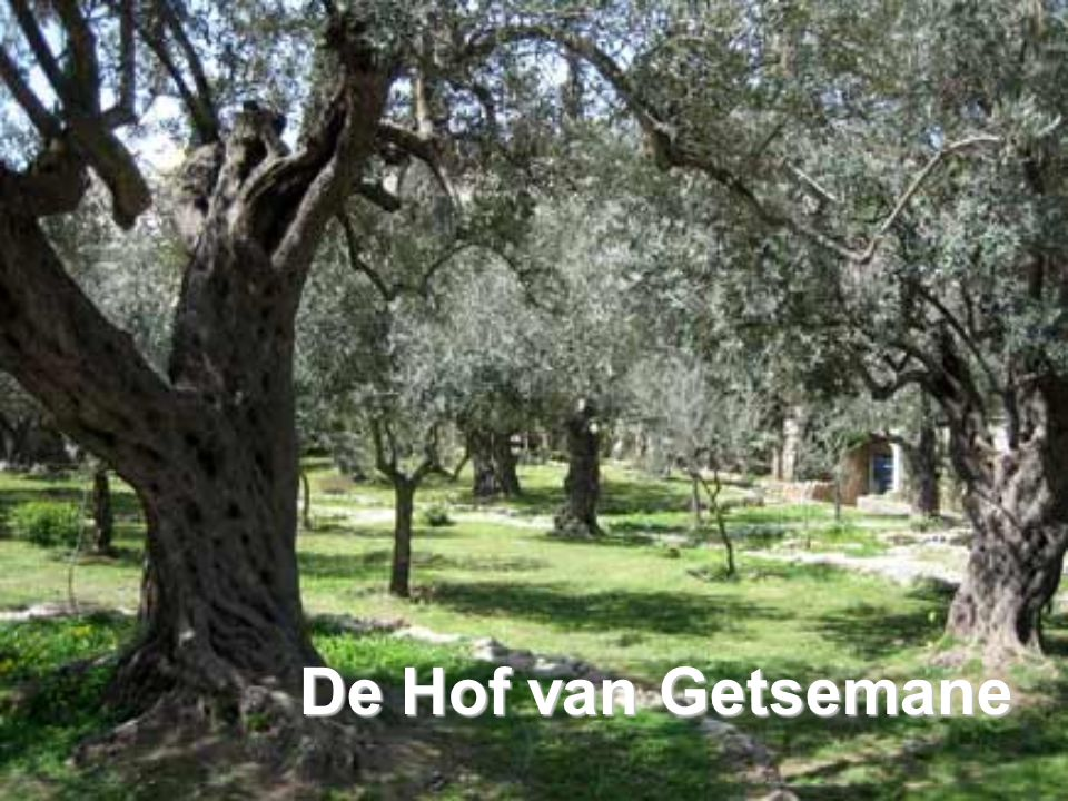 De Hof van Getsemane