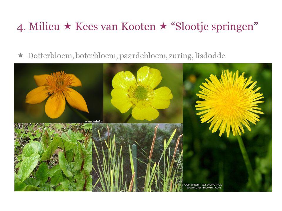 """4. Milieu  Kees van Kooten  """"Slootje springen""""  Dotterbloem, boterbloem, paardebloem, zuring, lisdodde"""
