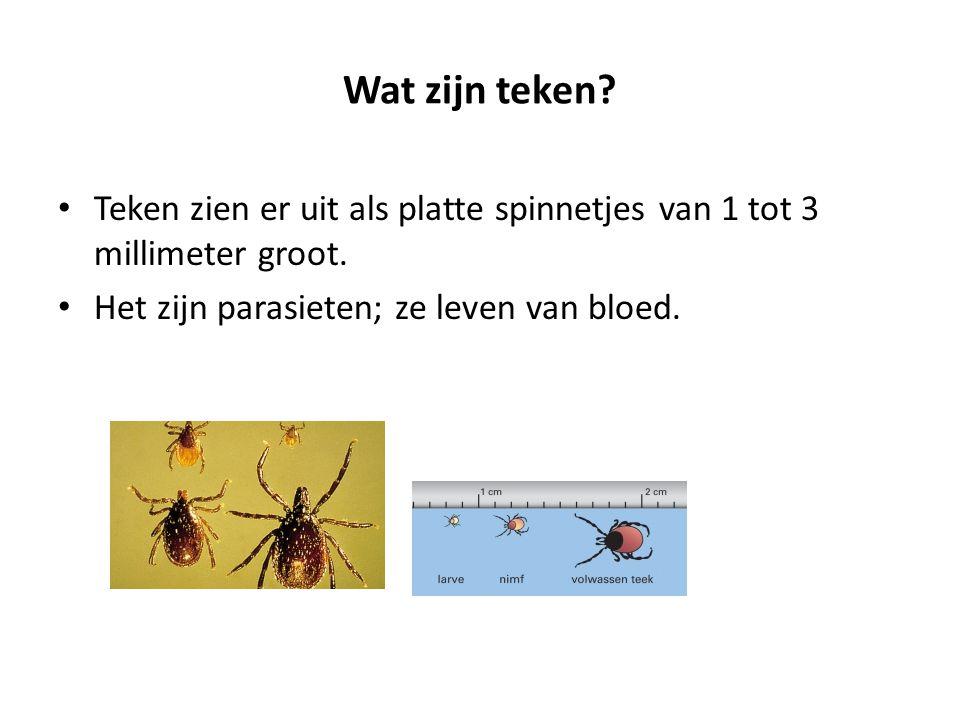 Wat zijn teken? Teken zien er uit als platte spinnetjes van 1 tot 3 millimeter groot. Het zijn parasieten; ze leven van bloed.