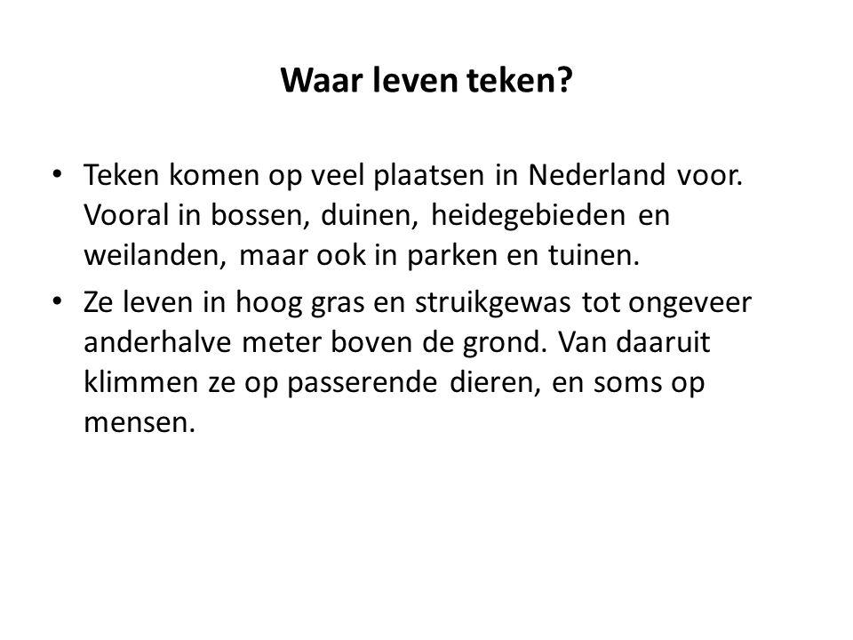 Waar leven teken? Teken komen op veel plaatsen in Nederland voor. Vooral in bossen, duinen, heidegebieden en weilanden, maar ook in parken en tuinen.