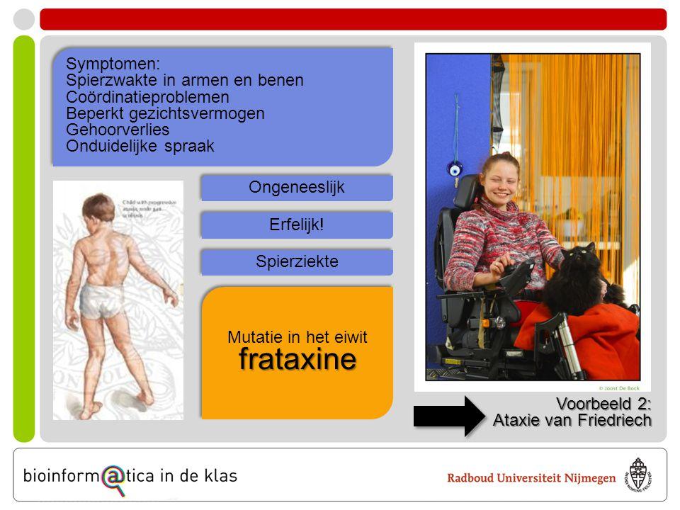 Voorbeeld 2: Ataxie van Friedriech Symptomen: Spierzwakte in armen en benen Coördinatieproblemen Beperkt gezichtsvermogen Gehoorverlies Onduidelijke s