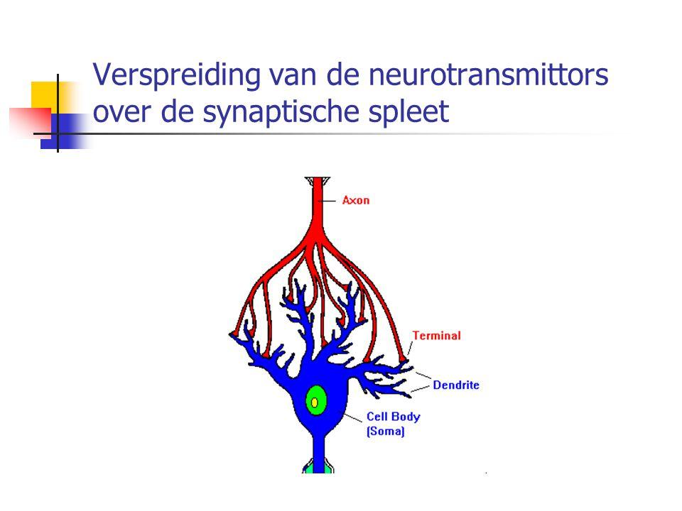Verspreiding van de neurotransmittors over de synaptische spleet