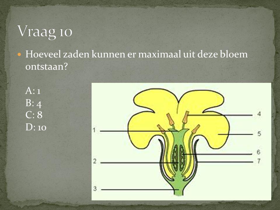 Hoeveel zaden kunnen er maximaal uit deze bloem ontstaan? A: 1 B: 4 C: 8 D: 10