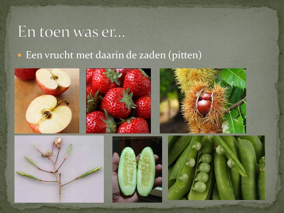 Een vrucht met daarin de zaden (pitten)