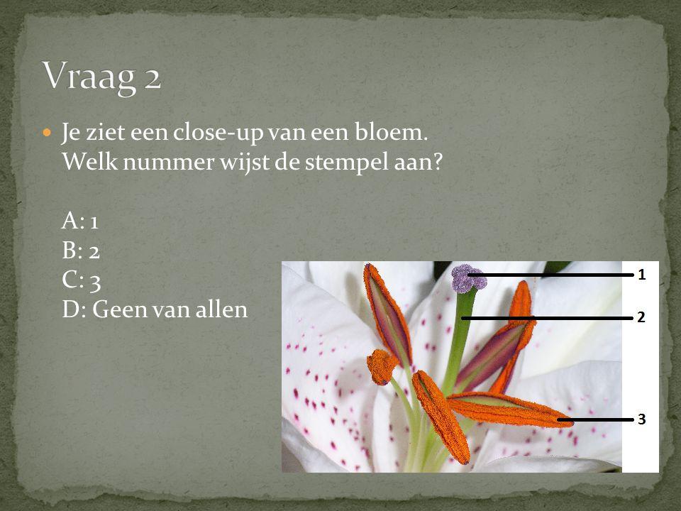 Je ziet een close-up van een bloem. Welk nummer wijst de stempel aan? A: 1 B: 2 C: 3 D: Geen van allen
