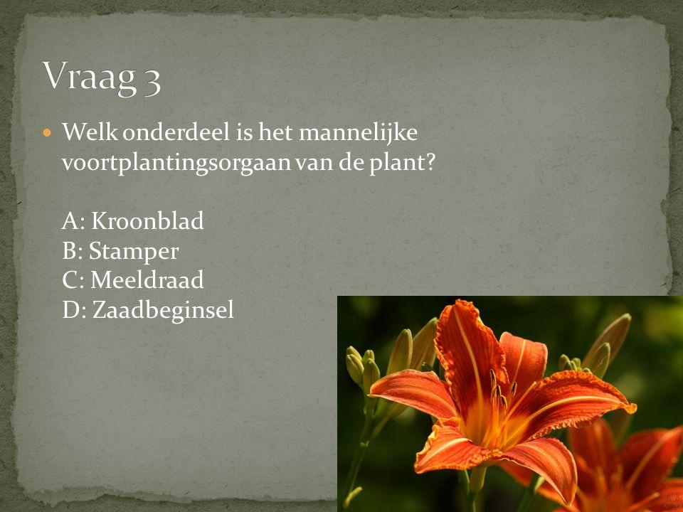 Welk onderdeel is het mannelijke voortplantingsorgaan van de plant? A: Kroonblad B: Stamper C: Meeldraad D: Zaadbeginsel