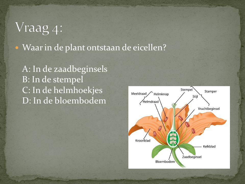 Waar in de plant ontstaan de eicellen? A: In de zaadbeginsels B: In de stempel C: In de helmhoekjes D: In de bloembodem