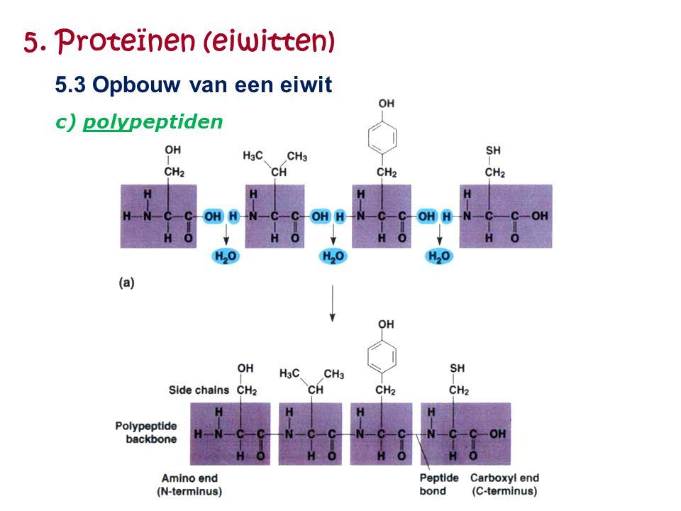 5. Proteïnen (eiwitten) 5.3 Opbouw van een eiwit c) polypeptiden