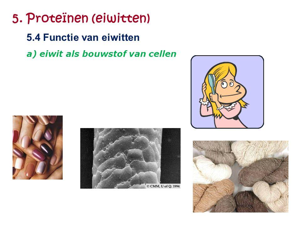 5. Proteïnen (eiwitten) 5.4 Functie van eiwitten a) eiwit als bouwstof van cellen