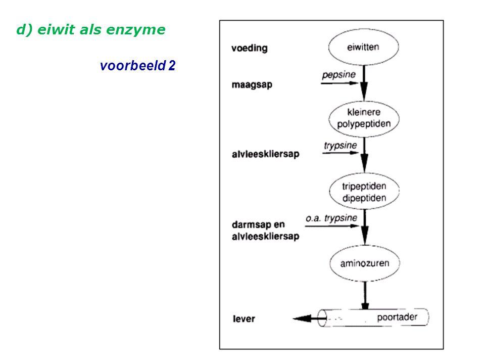 d) eiwit als enzyme voorbeeld 2