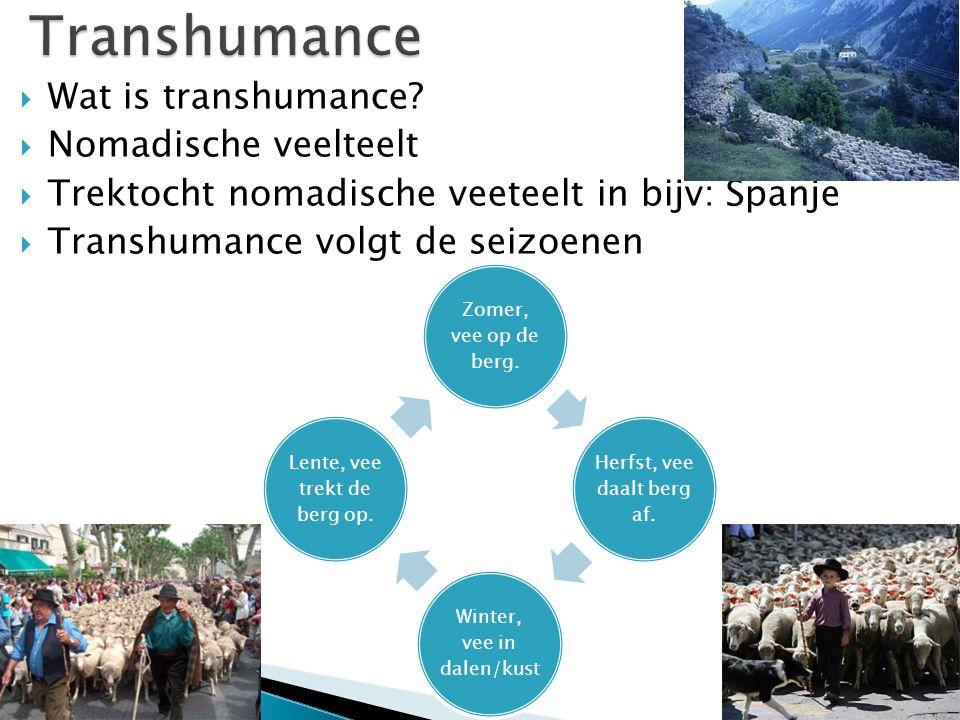  Wat is transhumance?  Nomadische veelteelt  Trektocht nomadische veeteelt in bijv: Spanje  Transhumance volgt de seizoenen Zomer, vee op de berg.
