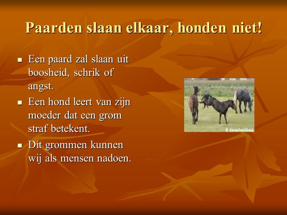 Paarden slaan elkaar, honden niet.Een paard zal slaan uit boosheid, schrik of angst.