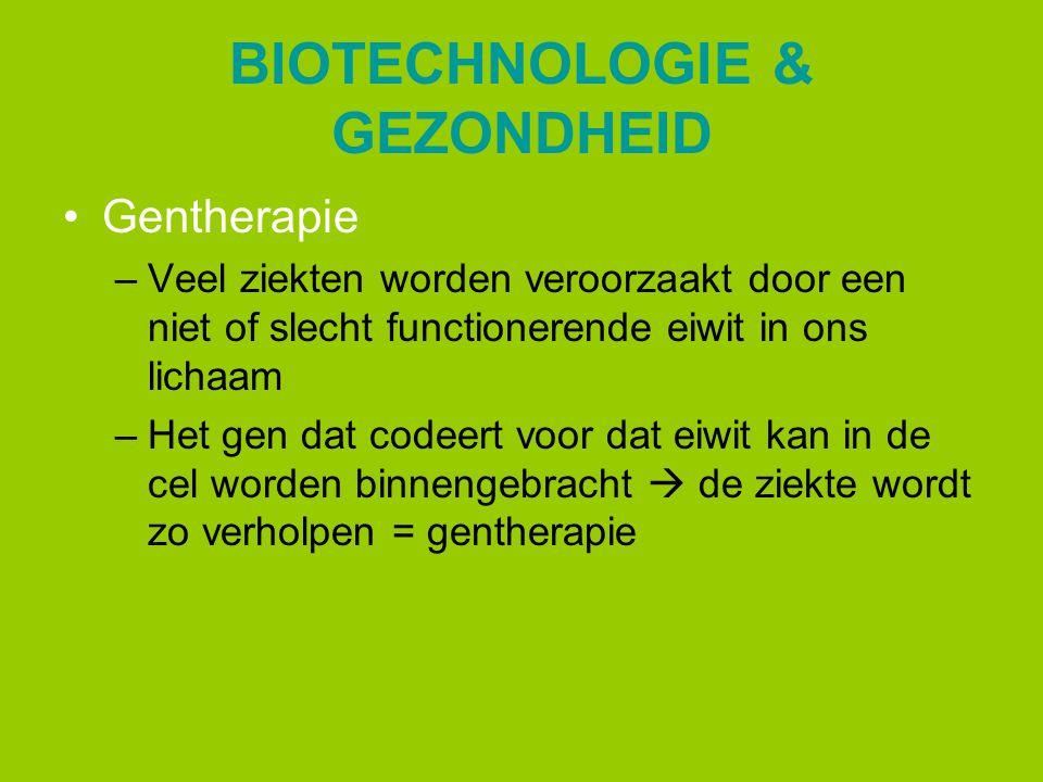 BIOTECHNOLOGIE & GEZONDHEID Gentherapie –Veel ziekten worden veroorzaakt door een niet of slecht functionerende eiwit in ons lichaam –Het gen dat code
