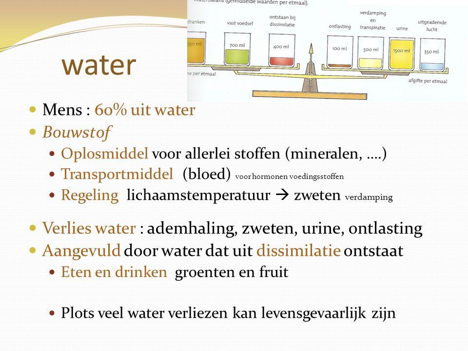 water Mens : 60% uit water Bouwstof Oplosmiddel voor allerlei stoffen (mineralen, ….) Transportmiddel (bloed) voor hormonen voedingsstoffen Regeling l