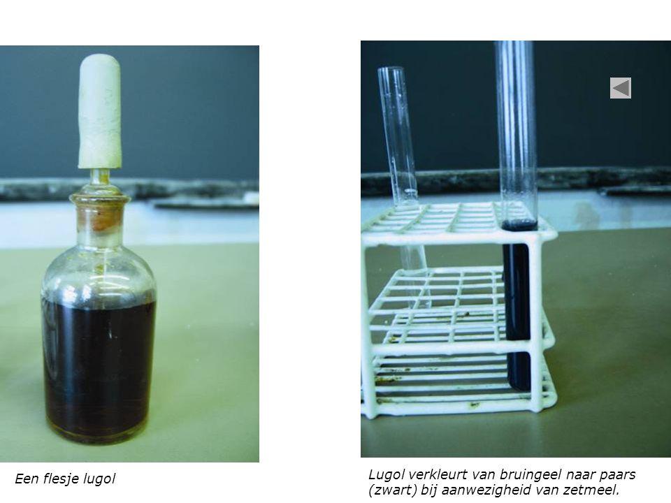 Een flesje lugol Lugol verkleurt van bruingeel naar paars (zwart) bij aanwezigheid van zetmeel.