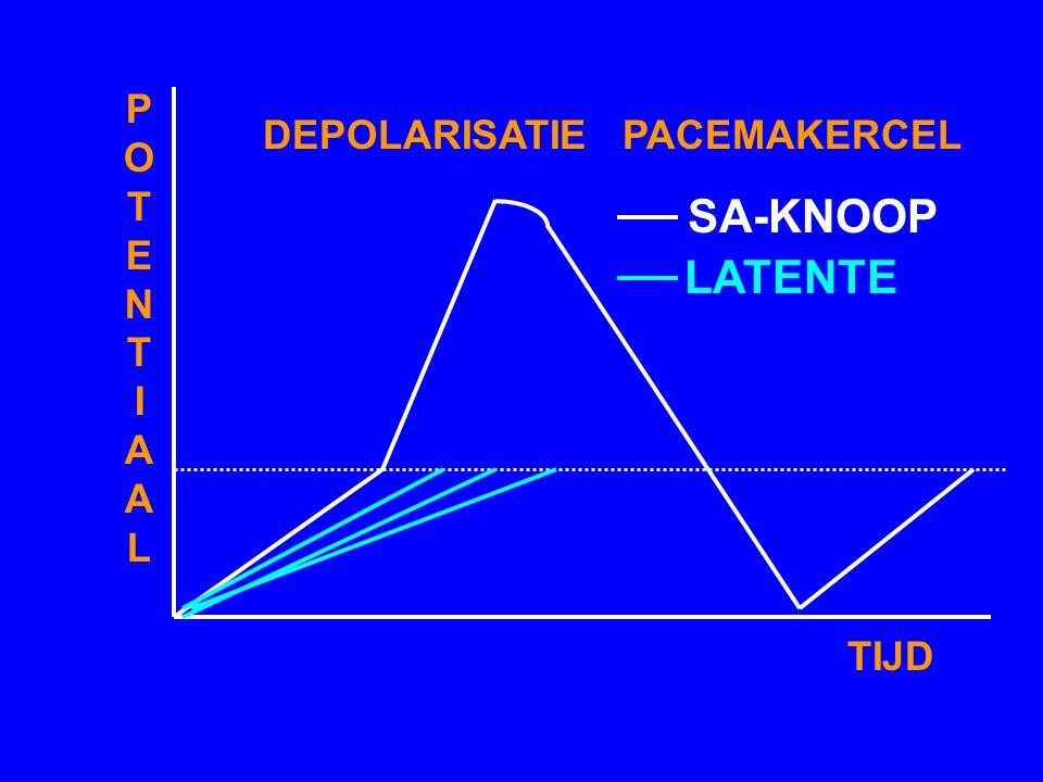 A. INSPECTIE B. PALPATIE C. AUSCULTATIE - BESPREKING EKG'S:. RITMESTOORNISSEN. GELEIDINGSSTOORNISSEN - HARTTONEN - BIJGERUISEN