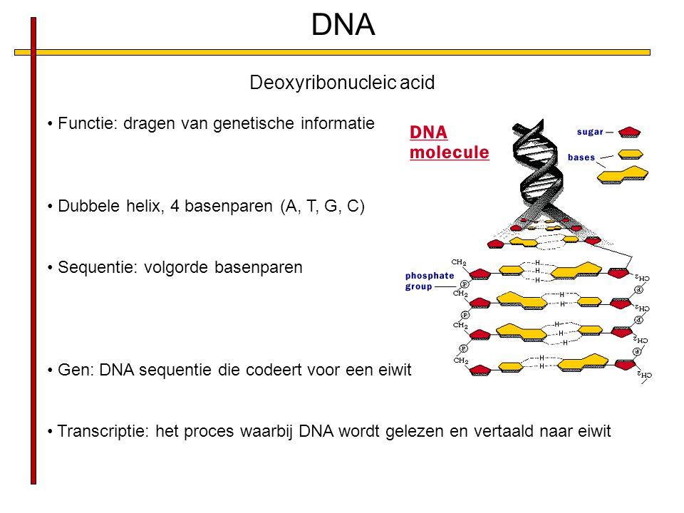 DNA Functie: dragen van genetische informatie Dubbele helix, 4 basenparen (A, T, G, C) Sequentie: volgorde basenparen Gen: DNA sequentie die codeert voor een eiwit Transcriptie: het proces waarbij DNA wordt gelezen en vertaald naar eiwit Deoxyribonucleic acid