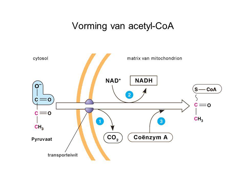 Vorming van acetyl-CoA