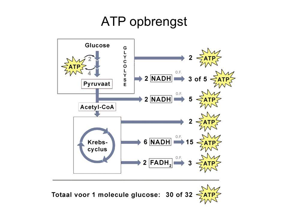 ATP opbrengst