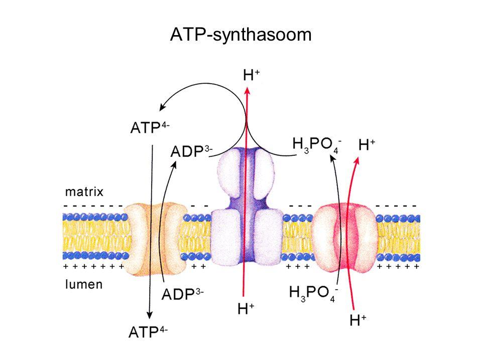 ATP-synthasoom