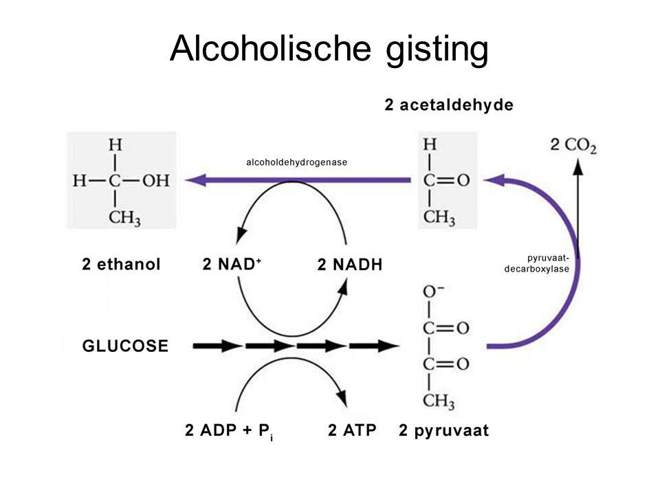 Alcoholische gisting