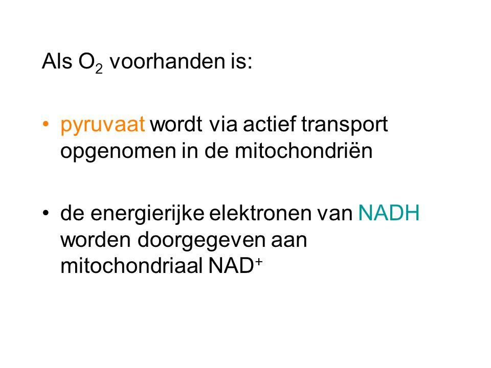 Als O 2 voorhanden is: pyruvaat wordt via actief transport opgenomen in de mitochondriën de energierijke elektronen van NADH worden doorgegeven aan mi