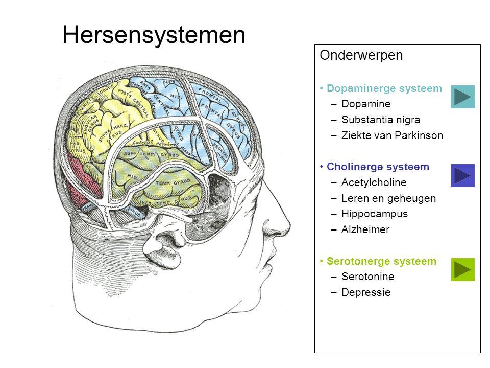 Onderwerpen Dopaminerge systeem –Dopamine –Substantia nigra –Ziekte van Parkinson Cholinerge systeem –Acetylcholine –Leren en geheugen –Hippocampus –A