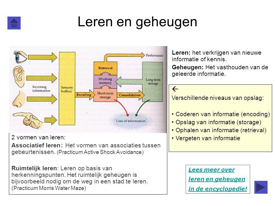 Leren en geheugen Leren: het verkrijgen van nieuwe informatie of kennis. Geheugen: Het vasthouden van de geleerde informatie. 2 vormen van leren: Asso